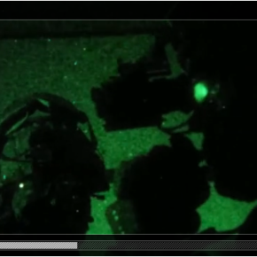 Placement: 13th MEU MRF conducts night raid at Yuma ProvingGround